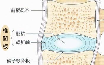 髄核と線維輪